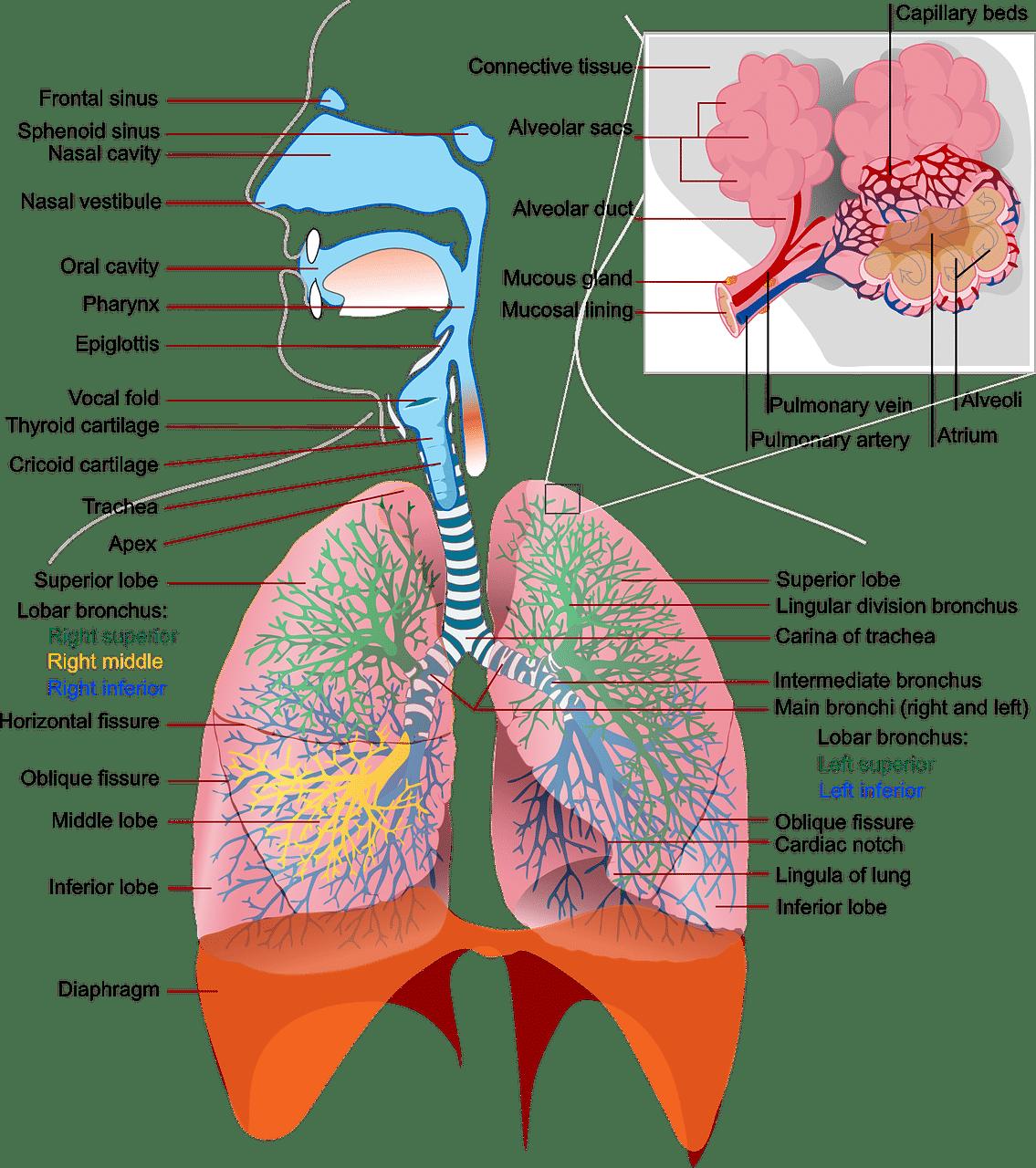 Die 3 Gänge Atmung